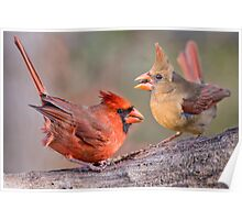 Cardinals on a Windy Day Poster