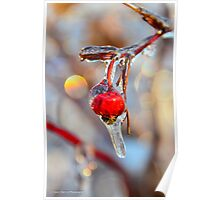 Iced Rosehip Poster