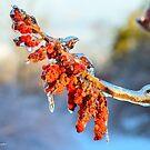 Sumac under Ice by Nancy Barrett