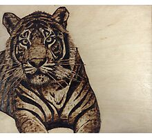 Tiger pyrography  Photographic Print