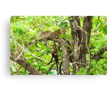 Leopard's lair Canvas Print