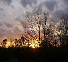 Alabama Beauty by Vivian Eagleson