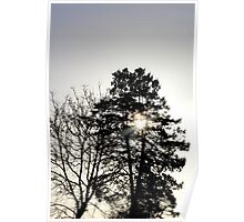 Trees in silhouette Poster