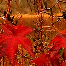 Sweet Gum Leaves on Marsh by Nadia Korths