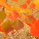 Bradford Pear Leaves in Autumn by Nadia Korths