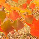 Bradford Pear Leaves in Autumn by Nadia Korths