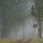 Trees in the Mist by Jaycee2009