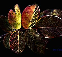 Coppertone Rose Leaf by DeeCarmack
