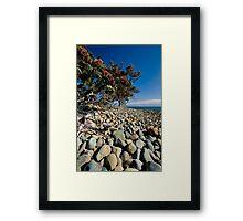 Pohutukawa Rocks Framed Print