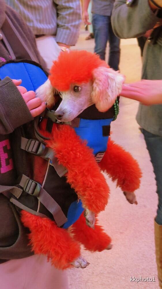 A Colorful Poodle by kkphoto1