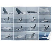 Whales Breaching on a Rainy Day Collage Poster