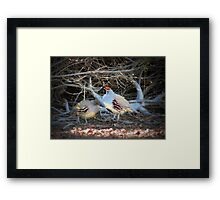 Gambels Quail~ Father w/ Chick Framed Print