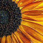 Sunrays by Celeste Mookherjee