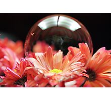 Transparent Beauty Photographic Print