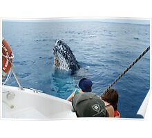 Whale and Humans Checking each other out Poster