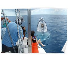 Whale Close Encounters Poster