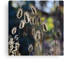 Graceful Grasses 2 Canvas Print