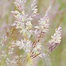Graceful Grasses 3 by Georgie Hart