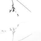 Graceful Grasses I by Georgie Hart