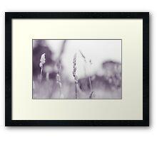 Summer Fields II Framed Print