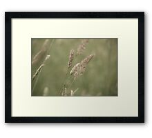 Summer Fields III Framed Print