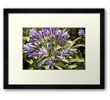 Purple Madness Framed Print
