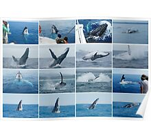 Whales Mixed Collage 1 Poster