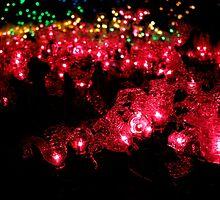 Christmas Lights 2 - Milner Garden by rsangsterkelly