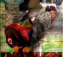 King Vulture by emiliegrant