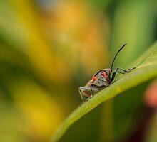 Boxelder Bug 2 by PhotoShopping