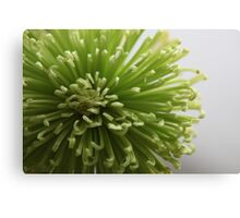 Green flower................ Canvas Print