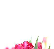 Red Tulip... by Bob Daalder