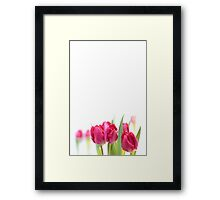 Red Tulip... Framed Print