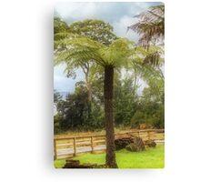 Tasmanian Tree Fern Canvas Print