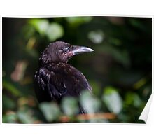 Baby Crow Magick Poster