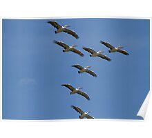 Pelican Squadron Poster
