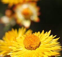 Garden Variety ........... by Nina  Matthews Photography