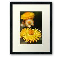 Garden Variety ........... Framed Print