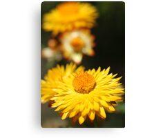 Garden Variety ........... Canvas Print