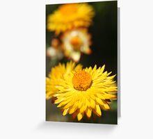 Garden Variety ........... Greeting Card