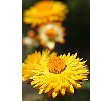 Garden Variety ........... Photographic Print