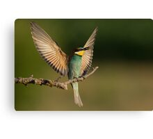 European Bee-Eater with a  Bee Canvas Print