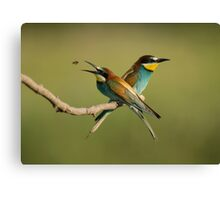 European Bee-Eaters Canvas Print