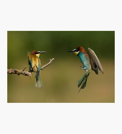 European Bee-Eater in Flight Photographic Print