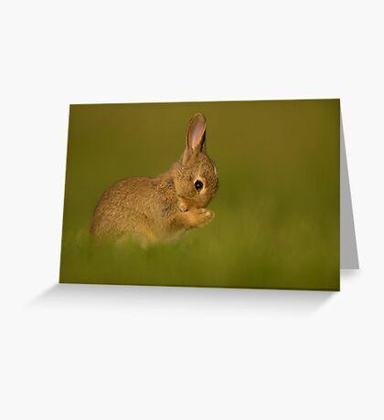 European Rabbit Greeting Card