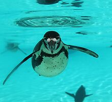 Penguin by eles