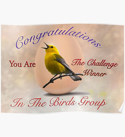 Challenge Winner for the Birds Banner Poster