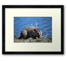 Groundhog Pose Framed Print