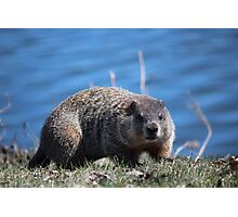 Groundhog Pose Photographic Print