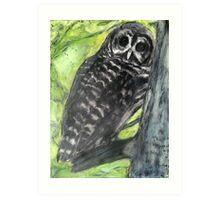 Owl Who Visits Art Print
